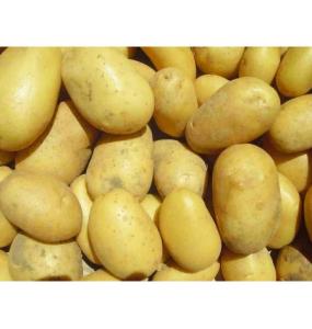"Pommes de terre ""Monalisa"""