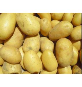 """Pommes de terre """"Levante"""""""