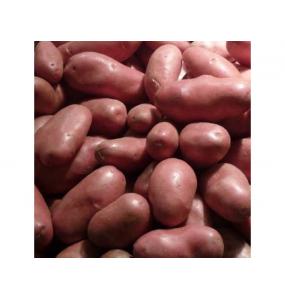 "Pommes de terre ""Prunelle"""